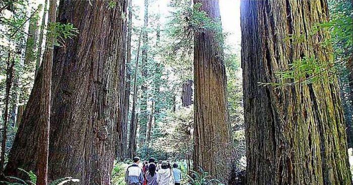 紅木的慧根:整體力量與智慧
